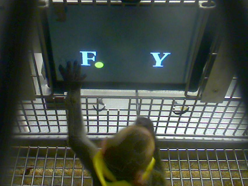 Bad at Math? These Monkeys Won't Make You Feel Better