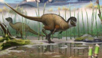 Feathered Plant-Eating Dinosaur