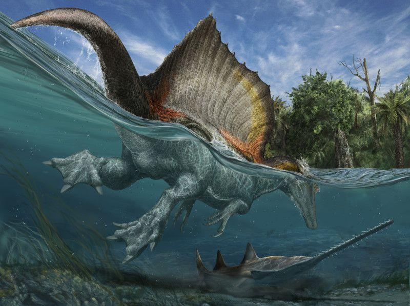 Largest Predatory Dinosaur Ever Discovered Hunted in Ancient Rivers