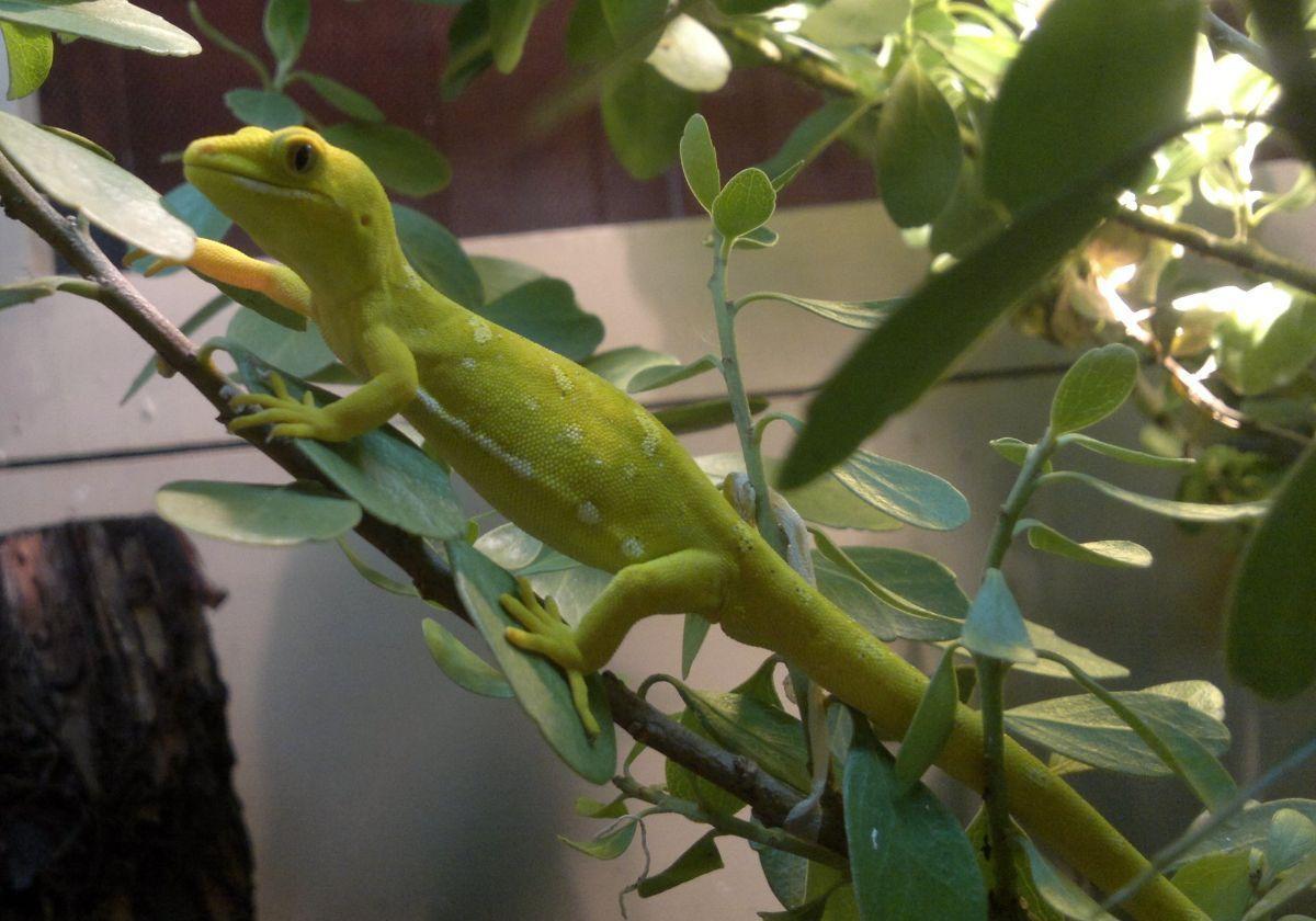 NASA Tests 'Gecko Gripper' For Spaceflight Stickiness