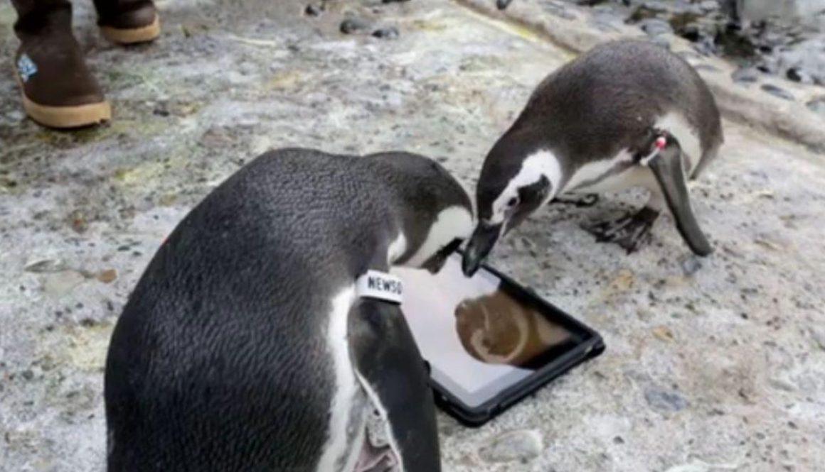 penguinsipad