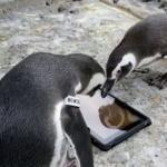 They make games for penguins now