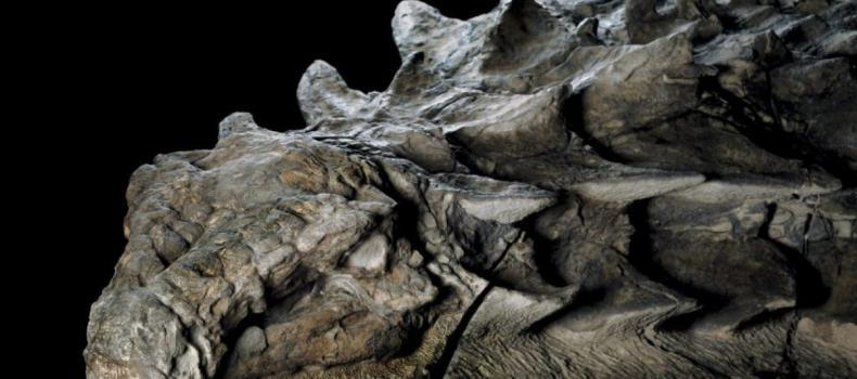 Perfectly Preserved Dinosaur Looks Like A Statue