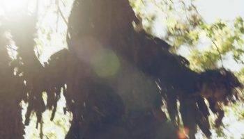TreeStalker